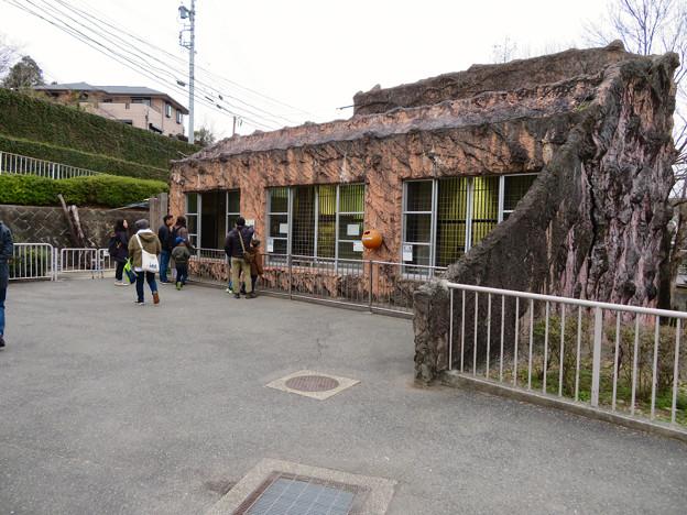 東山動植物園のライオン舎 - 4