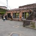 Photos: 東山動植物園のライオン舎 - 4