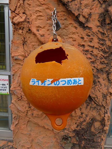 Photos: 東山動植物園のライオン舎 - 5