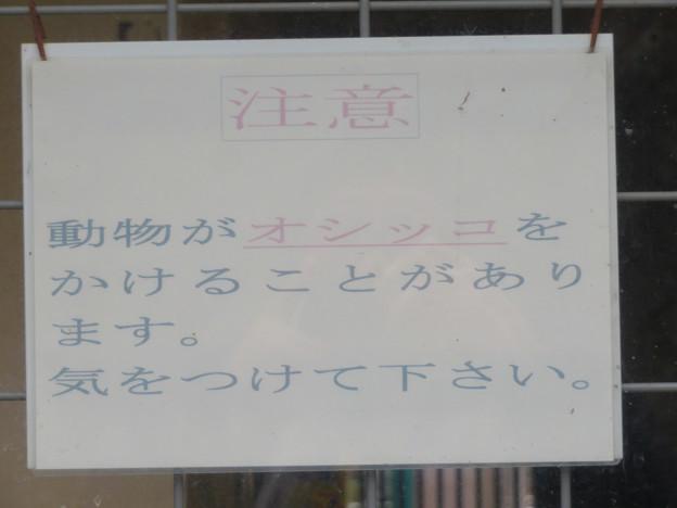 Photos: 東山動植物園のライオン舎 - 6:オシッコに注意