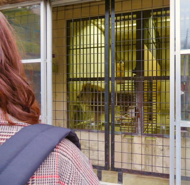 東山動植物園のライオン舎 - 7