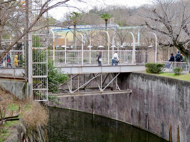 東山動植物園のライオン舎 - 8:ライオン舎にかかる橋