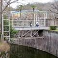 Photos: 東山動植物園のライオン舎 - 8:ライオン舎にかかる橋