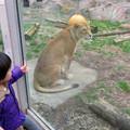 Photos: 東山動植物園のライオン - 6