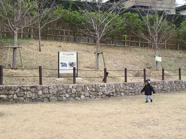 東山動植物園:旧アジアゾウ舎跡地に整備された「マカニーとエルドの広場」- 1