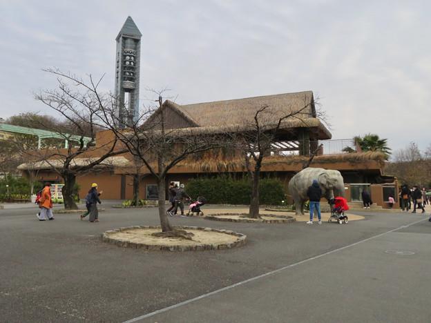 東山動植物園のアジアゾウ舎「ゾージアム」 - 1