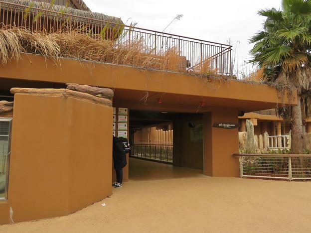 東山動植物園のアジアゾウ舎「ゾージアム」 - 2