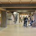 Photos: 東山動植物園のアジアゾウ舎「ゾージアム」 - 3