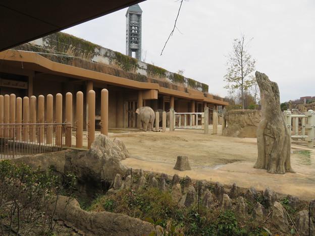 東山動植物園のアジアゾウ舎「ゾージアム」 - 4