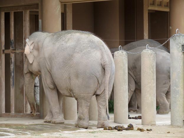 東山動植物園のアジアゾウ舎「ゾージアム」 - 5