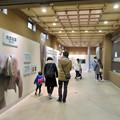 Photos: 東山動植物園のアジアゾウ舎「ゾージアム」 - 6