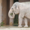 東山動植物園のアジアゾウ舎「ゾージアム」 - 10