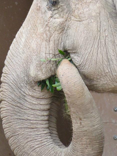 東山動植物園のアジアゾウ舎「ゾージアム」 - 11