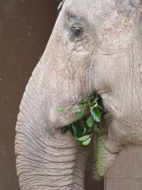 東山動植物園のアジアゾウ舎「ゾージアム」 - 12