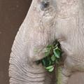Photos: 東山動植物園のアジアゾウ舎「ゾージアム」 - 12