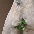 Photos: 東山動植物園のアジアゾウ舎「ゾージアム」 - 13