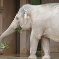 東山動植物園のアジアゾウ舎「ゾージアム」 - 14