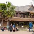 東山動植物園のアジアゾウ舎「ゾージアム」 - 15