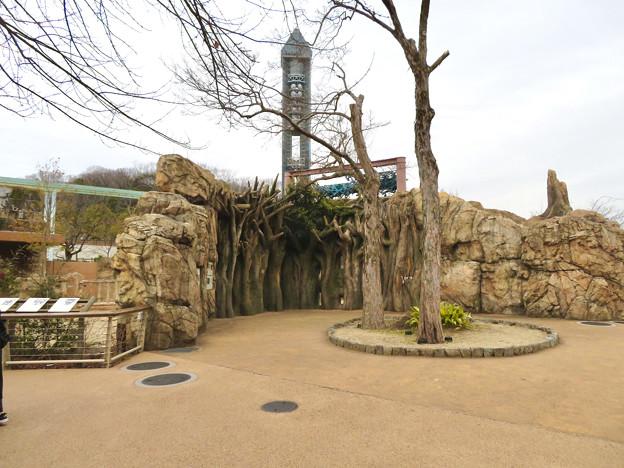 東山動植物園のアジアゾウ舎「ゾージアム」 - 16