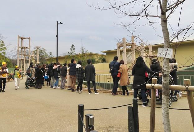 東山動植物園の新ゴリラ・チンパンジー舎 - 2:ゴリラを見てた沢山の人たち