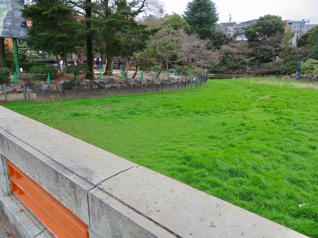 すっかり草で覆われてた東山動植物園正門前の池