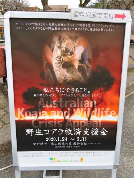 東山動植物園:オーストラリア大火災の支援金募集
