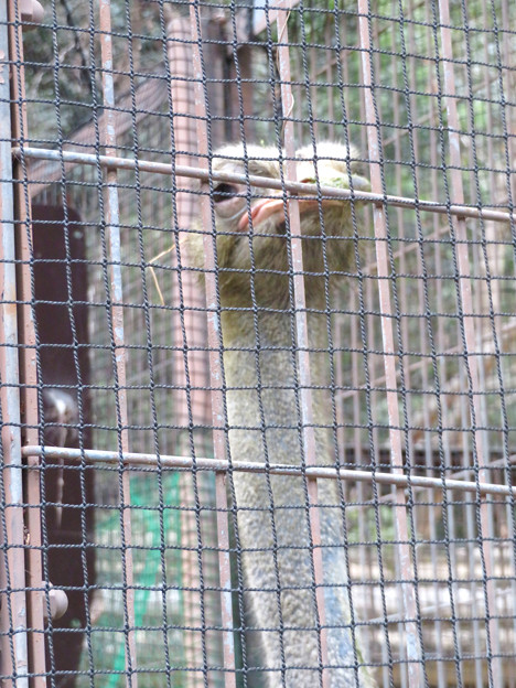 東山動植物園:ダチョウ - 3