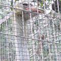 東山動植物園:ダチョウ - 4