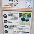 東山動植物園:ダチョウ - 5(説明)