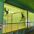 Photos: 東山動植物園:今日は室内にいたフクロテナガザル - 2