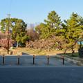 荒子公園 - 3:南側の梅園