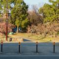 荒子公園 - 4:南側の梅園