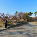 荒子公園 - 7:南側の梅園