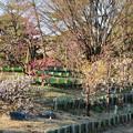 荒子公園 - 8:南側の梅園