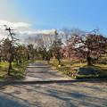 荒子公園 - 10:南側の梅園