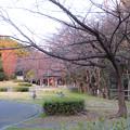 Photos: 二子山公園 - 20