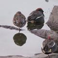 色んな種類のカモが沢山いた木曽川沿い(犬山市側)- 13
