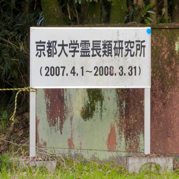 旧・京都大学霊長類研究所(2007年4月1日~2008年3月31日) - 3