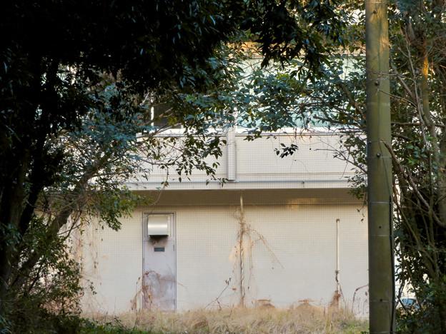 旧・京都大学霊長類研究所(2007年4月1日~2008年3月31日) - 7