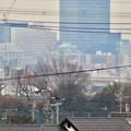 Photos: 太良池沿いから見た名古屋城 - 1