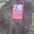 名古屋市農業センター No - 15:梅の説明(藤牡丹枝垂、ふじぼたんしだれ)