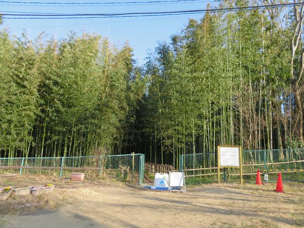 名古屋市農業センター No - 34:竹林