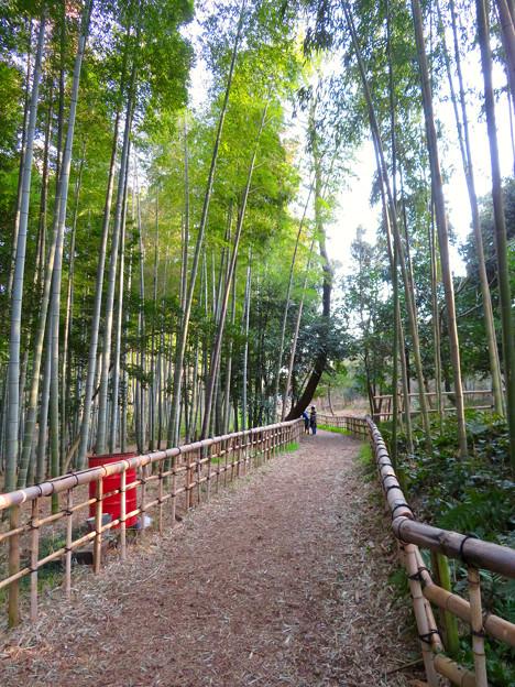 名古屋市農業センター No - 35:竹林