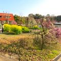 名古屋市農業センター No - 47:満開の梅と菜の花