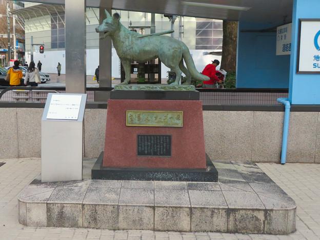 盲導犬サーブの像 - 1
