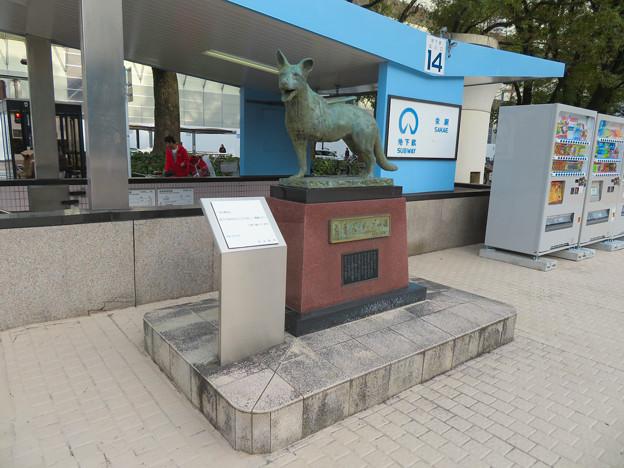 盲導犬サーブの像 - 3