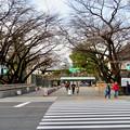 名古屋城正門 - 1
