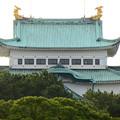 名城公園から見上げた名古屋城天守閣上部 - 1