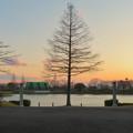 夕焼けと1本の木、ギリシャ建築風の柱 - 1