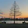 夕焼けと1本の木、ギリシャ建築風の柱 - 2